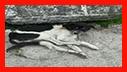 عملیات 125 برای نجات یک قلاده سگ/آتش نشانی رشت
