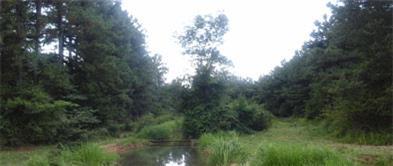 باغ طبيعت